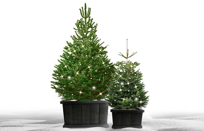 Complete kerstboom voor buiten